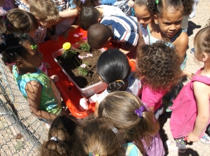 CAS Pre-School Students Prepare to plant flowers for Earth Day